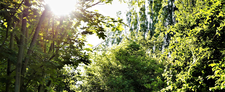 Sluneční svit na parkem Radonice
